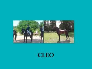 Suchergebnisse für cleo